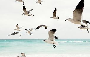 Birds in the airの写真素材 [FYI02211358]