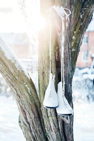 Ice skates hanging on tree in Enskede, Swedenの写真素材 [FYI02211398]