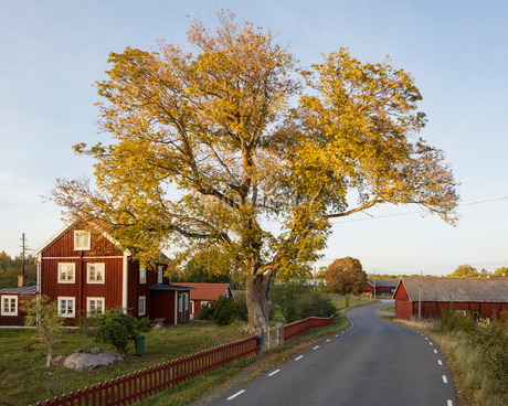 Houses along rural road in Krokshult, Swedenの写真素材 [FYI02211420]