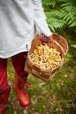 Boy with a basket of mushroomsの写真素材 [FYI02211439]