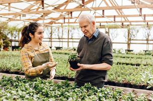 Garden centre worker talking to senior manの写真素材 [FYI02211638]