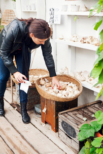 Young woman reaching into a basket of garlic in Swedenの写真素材 [FYI02211673]