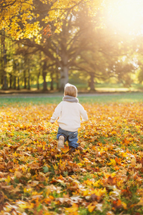 Little boy playing in autumn leaves in Swedenの写真素材 [FYI02211741]