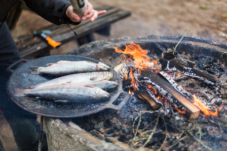 Seasoning fish to be cooked on a campfireの写真素材 [FYI02211781]