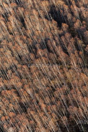 Aerial view of forest in Uppland, Swedenの写真素材 [FYI02211885]