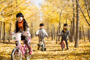 Three children cycling in autumn woodsの写真素材 [FYI02216346]