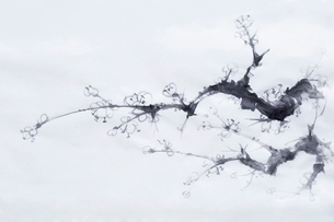 Plum blossomの写真素材 [FYI02217595]