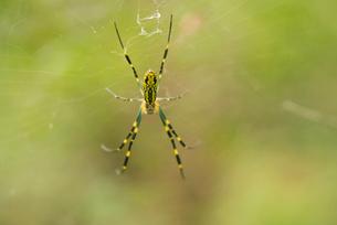 Spiderの写真素材 [FYI02217969]