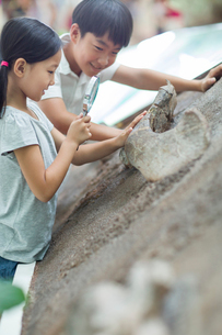 Chinese children in museum of natural historyの写真素材 [FYI02218291]