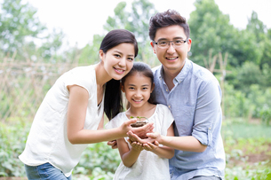 Young family holding a seedling togetherの写真素材 [FYI02219589]