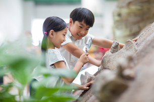 Chinese children in museum of natural historyの写真素材 [FYI02219979]