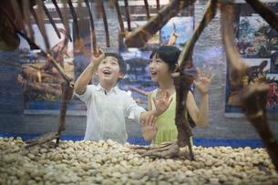 Children in museum of natural historyの写真素材 [FYI02220345]