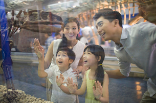 Young family in museum of natural historyの写真素材 [FYI02220461]