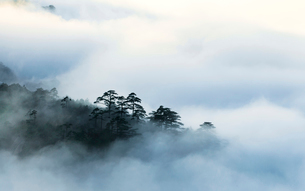 Mt Huangshan in Anhui province,Chinaの写真素材 [FYI02224271]