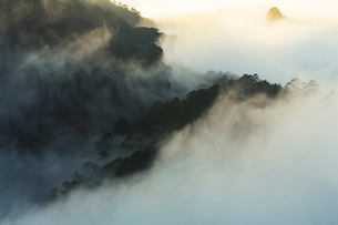 Mt Huangshan in Anhui province,Chinaの写真素材 [FYI02224323]