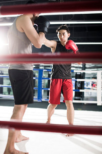 Boxers fighting in boxing ringの写真素材 [FYI02224758]