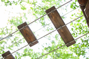 Tree top adventure parkの写真素材 [FYI02224832]