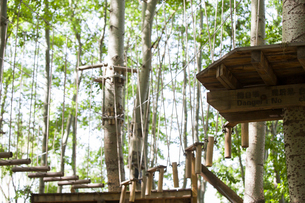 Tree top adventure parkの写真素材 [FYI02225018]