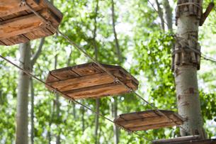Tree top adventure parkの写真素材 [FYI02225279]