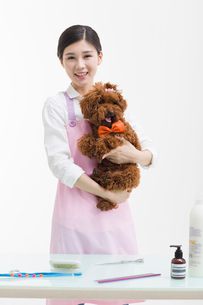 Groomer with a cute poodleの写真素材 [FYI02225325]