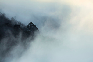 Mt Huangshan in Anhui province,Chinaの写真素材 [FYI02225510]