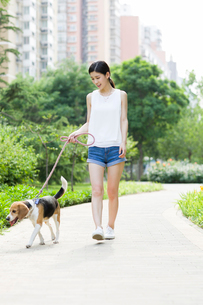 Young woman walking with a cute dogの写真素材 [FYI02225638]
