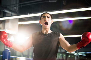 Boxer cheering in boxing ringの写真素材 [FYI02225815]