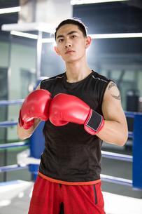 Portrait of boxerの写真素材 [FYI02225983]