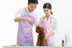 Groomers with a cute poodleの写真素材 [FYI02226025]