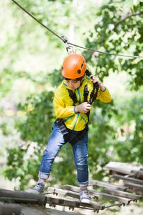 Little boy playing in tree top adventure parkの写真素材 [FYI02226436]