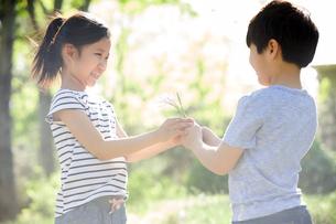 Little boy giving girl wildflowers in woodsの写真素材 [FYI02226439]
