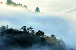 Mt Huangshan in Anhui province,Chinaの写真素材 [FYI02226840]