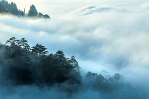 Mt Huangshan in Anhui province,Chinaの写真素材 [FYI02226966]