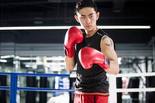 Portrait of boxerの写真素材 [FYI02227302]