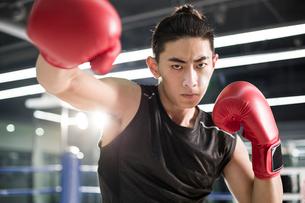 Portrait of boxerの写真素材 [FYI02227433]