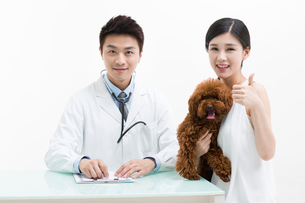 Veterinarian examining a cute poodleの写真素材 [FYI02228230]