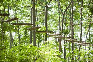 Tree top adventure parkの写真素材 [FYI02229288]