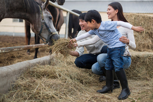 Young Chinese family feeding horseの写真素材 [FYI02229816]