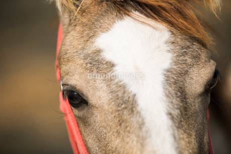 Close up of horse eyeの写真素材 [FYI02230968]