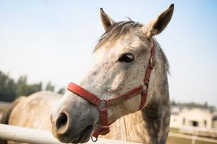 Close up of horseの写真素材 [FYI02231327]