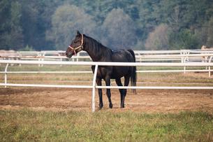 Horse standing in paddockの写真素材 [FYI02232159]