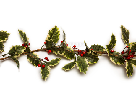 Christmas holly with red berrysの写真素材 [FYI02234267]