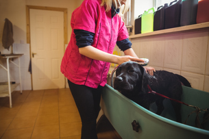Woman showering a dog in bathtubの写真素材 [FYI02234891]