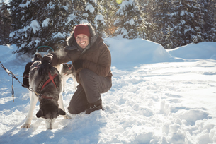 Smiling musher tying husky dogs to the sledgeの写真素材 [FYI02234894]