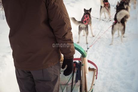 Man on a sleigh ride with Siberian huskyの写真素材 [FYI02235444]