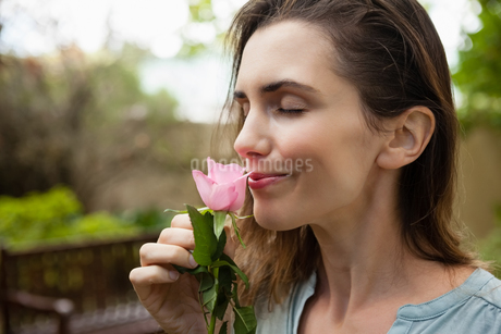 Close-up of beautiful woman with eyes closed smelling pink roseの写真素材 [FYI02235606]