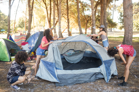 Friends setting up their tents on fieldの写真素材 [FYI02235624]