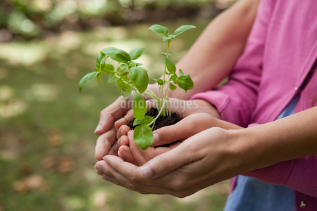 Midsection of woman and daughter holding seedling in cupped handsの写真素材 [FYI02235683]