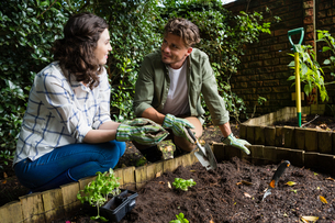Couple planting young plant into the soilの写真素材 [FYI02235782]