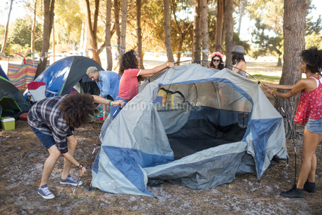 Young friends setting up tents on fieldの写真素材 [FYI02236260]